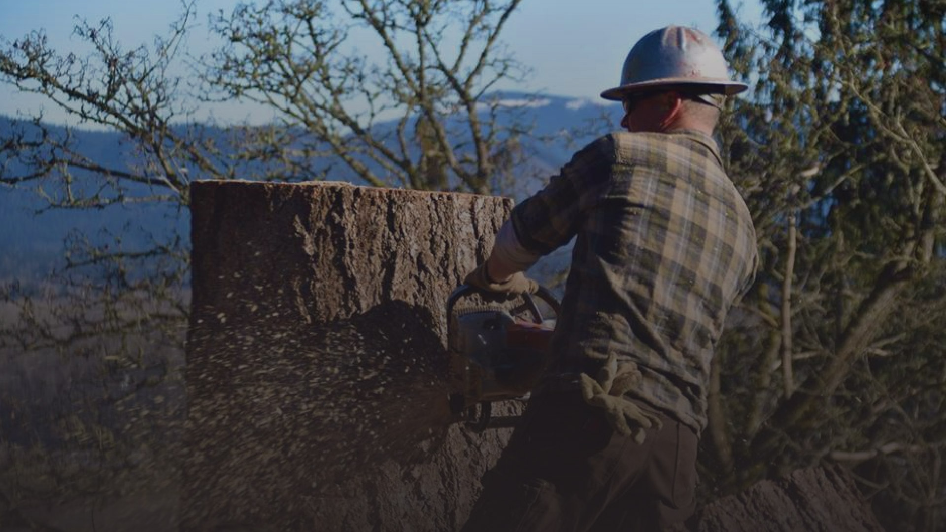 Puget Sound Tree Care – Expert Care Makes A Difference